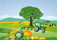 Country farm and harvest. Cheerful illustration of a country farm with a tractor, vegetables, dairy cows and an agriculture theme Stock Images