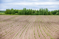 Country farm landscape - plowed field and trees. Agriculture beginning of spring. Stock Images