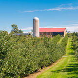 Country farm and  orchard landscape Royalty Free Stock Images
