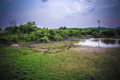 Country farm in Thailand wallpaper Stock Photography