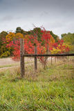 Country fence in autumn Stock Photography
