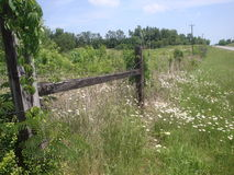 Country fence and field Stock Photography