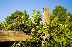Country fence post and vines Stock Photo