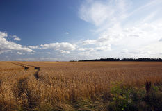 Country field. A landscape view of a country farm field with vehicle tracks running through it Stock Images