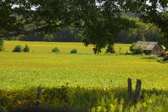 Country Field. Old Barn in yellow farm field Stock Images