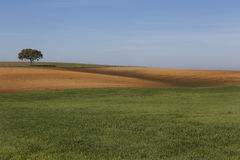 Country Field royalty free stock images