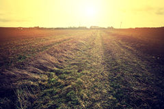 Country field and bright sun. Stock Photos