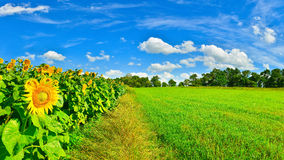 Country field Royalty Free Stock Photo
