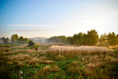 Country field at sunrise Royalty Free Stock Images