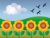 Country fields with sunflowers. Vector image of a country sunny landascape with sunflowers Stock Photos
