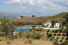 Country finca and mango groves, Axarquia, Spain. Stock Image