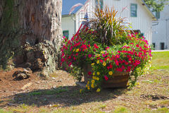 Country Flower Pot Stock Photography