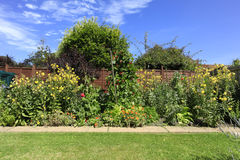 Country garden. Evening Primrose Runner Beans and Broad beans growing in an English Country garden Stock Photography
