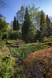 Country Garden - Yorkshire - England. A large country garden or arboretum on a country estate in Spring time in North Yorkshire in the United Kingdom Royalty Free Stock Images