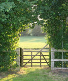 Country Gate. Five bar wooden gate and beech hedge backit by evening sunlight Stock Photo