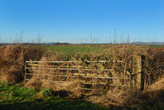 Country gate and fields in Berwickshire. Iron gate on track in winter Royalty Free Stock Photos