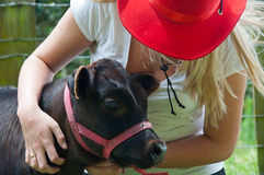 Country Girl and Calf Royalty Free Stock Images