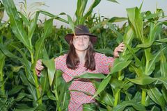 Country girl in corn field Royalty Free Stock Photography