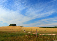 Country gold field Royalty Free Stock Photography