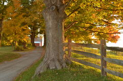 Country gravel driveway to a farm Royalty Free Stock Images