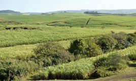 Country in green. Countryside on the north coast of KZN South Africa Royalty Free Stock Images