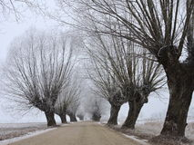 Country highroad and old  tree in frost , Lithuania Royalty Free Stock Images