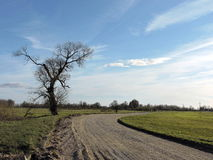 Country highroad and old  tree , Lithuania Royalty Free Stock Images