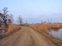 Country highroad and old  trees , Lithuania Royalty Free Stock Image