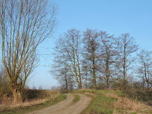 Country highroad and old  trees , Lithuania Royalty Free Stock Photo