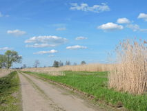 Country highroad and reed , Lithuania Stock Image
