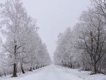 Country highroad and tree in frost , Lithuania Royalty Free Stock Photography