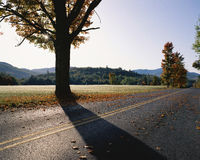 Country highway with fall trees Royalty Free Stock Image