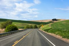 Country Highway. Green wheat fields Stock Image