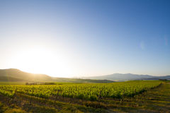 Country hills in Tuscany, Italy Royalty Free Stock Photo