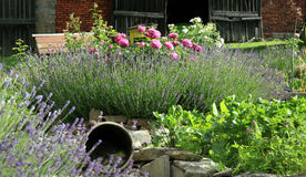 Country home garden by rustic style. Royalty Free Stock Photo