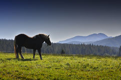 Country and horse Royalty Free Stock Photos
