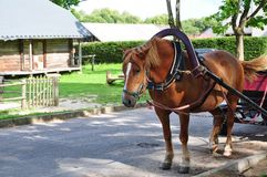 Country horse Royalty Free Stock Photos