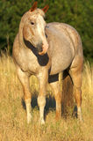 Country Horse. Pretty Horse Standing in a Field Stock Images