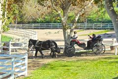 Country horse and Buggy Royalty Free Stock Photography