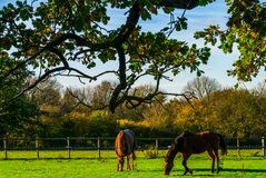 Country horse grazing in a pasture, farm fenced, rural environm royalty free stock images