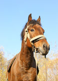 Country horse portrait Stock Photo