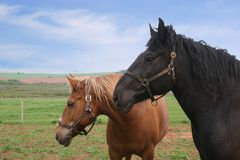 Country Horses royalty free stock photography