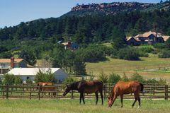 Country Horses on a Ranch in Colorado. Horses on a Ranch iin rural Colorado Stock Images
