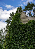 Country house covered in green leaves plants Royalty Free Stock Images