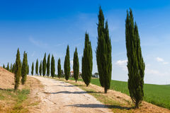 Country house with cypress in Tuscany, Italy Stock Photos
