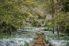 Country House at the End of a Flower Lined Lane. This beautiful country lane is located in Devon England.  A fine example of what can be found when exploring the Royalty Free Stock Photography