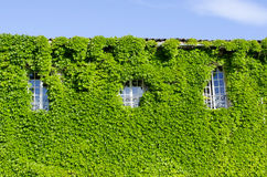 Country house facade in the green Royalty Free Stock Images