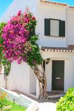 Country house with flowers. Royalty Free Stock Images