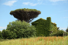 Country House Fully Covered With Ivy Royalty Free Stock Photos