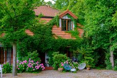 Country House Landscape Hydrangea Flowers Stock Photo